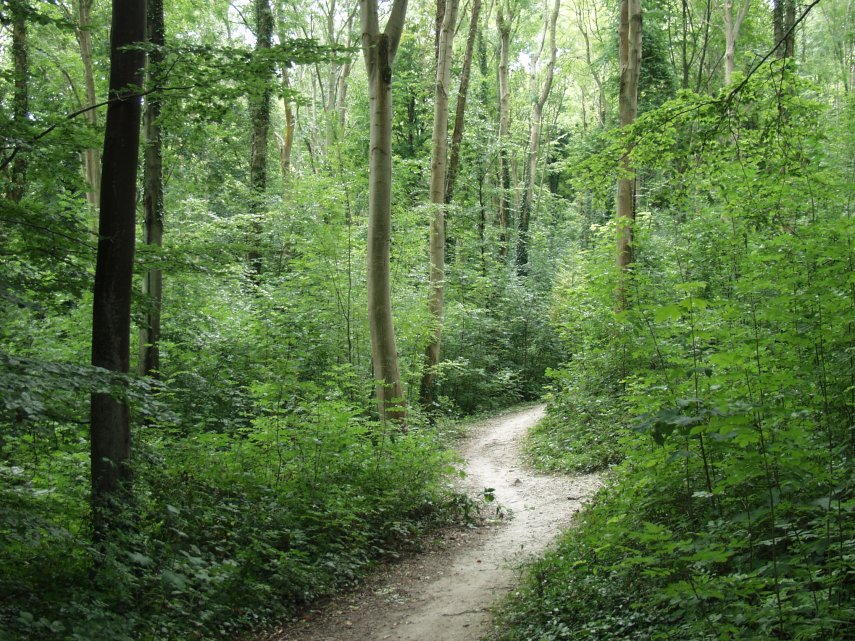 dog walking in the Friston Forest